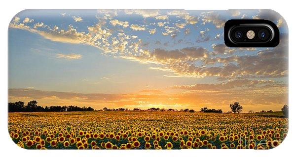 Kansas Sunflowers At Sunset IPhone Case