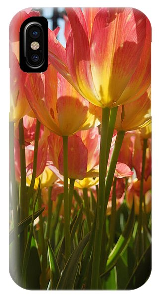 Kathy's Tulips IIi IPhone Case