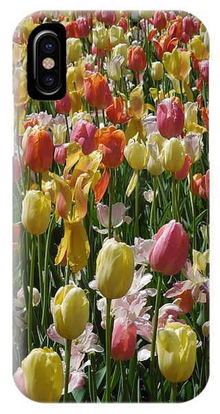 Kathy's Tulips Iv IPhone Case