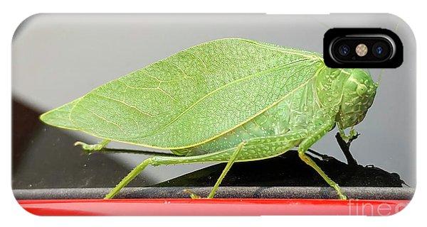 Katydids- Bush Crickets IPhone Case