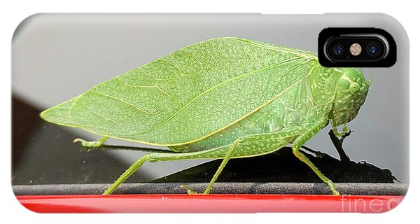 Katydids- Bush Crickets IPhone Case