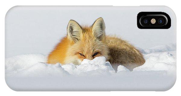 Snow Hide IPhone Case