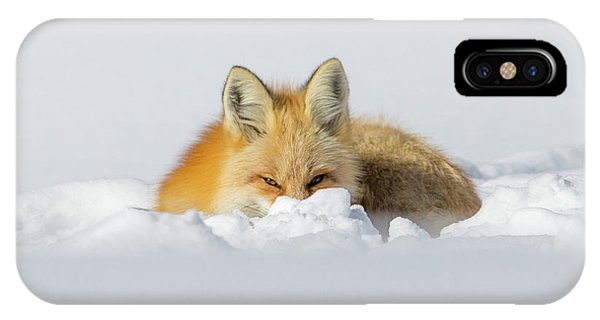 Snow Hide IPhone Case