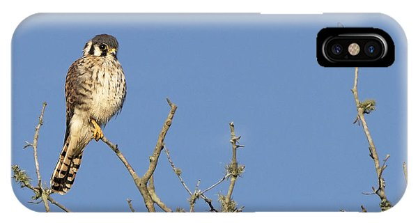 Kestrel And Lunch IPhone Case