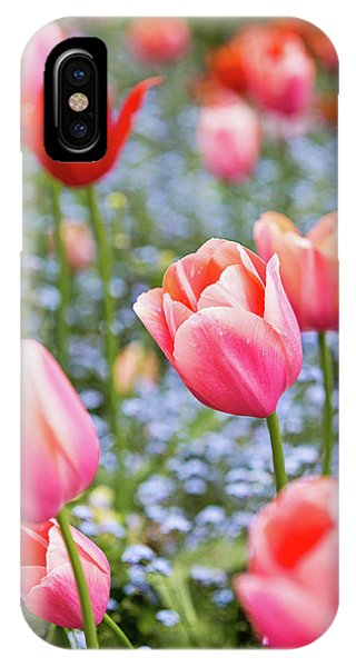 Keukenhof Tulips - Amsterdam IPhone Case