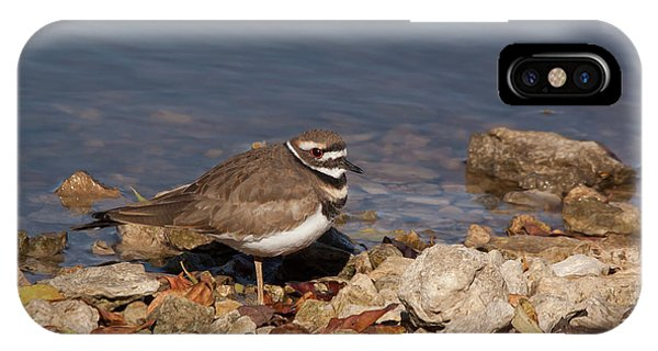 Killdeer iPhone Case - Kildeer On The Rocks by Robert Frederick