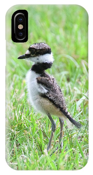 Killdeer iPhone Case - Killdeer Chick 3825 by Michael Peychich