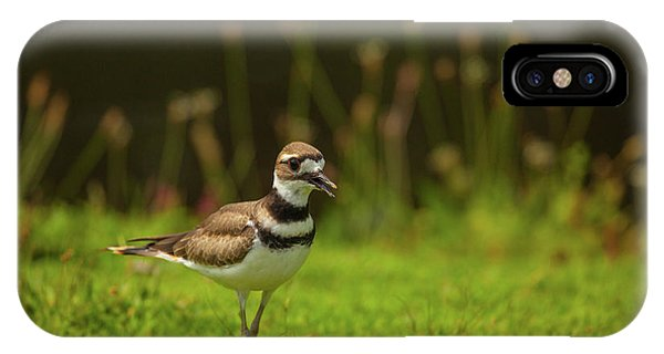 Killdeer iPhone Case - Killdeer by Karol Livote