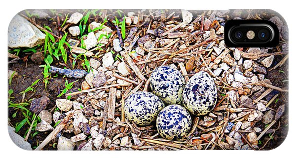 Killdeer iPhone Case - Killdeer Nest by Cricket Hackmann