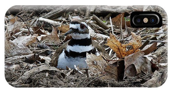 Killdeer iPhone Case - Killdeer On It's Nest 2682 by Michael Peychich