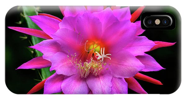 Kimnach's Pink Orchid Cactus IPhone Case