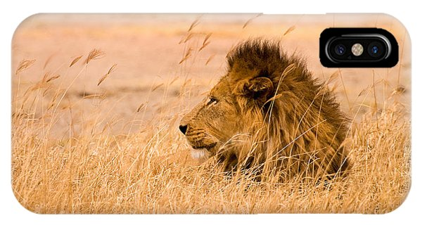 Safari iPhone Case - King Of The Pride by Adam Romanowicz