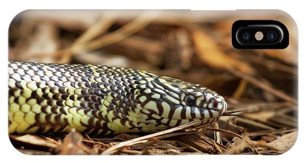 King Snake 1 IPhone Case