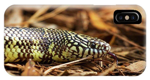 King Snake 2 IPhone Case