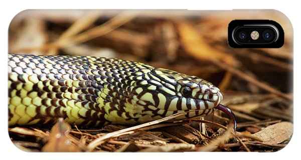 King Snake 2 IPhone Case