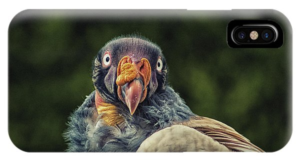 Condor iPhone Case - King Vulture by Martin Newman