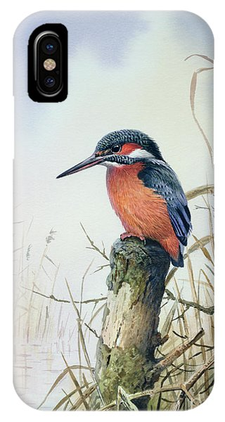 Kingfisher iPhone Case - Kingfisher by Carl Donner
