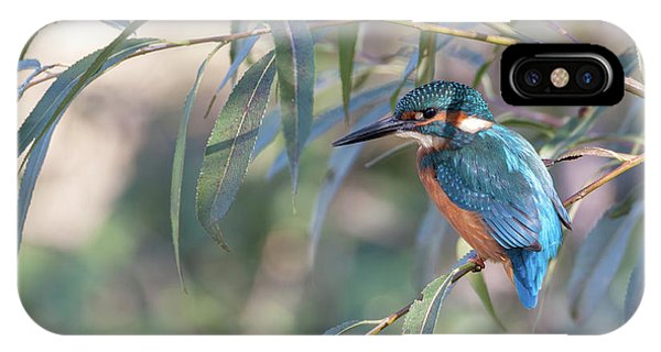 Kingfisher In Willow IPhone Case