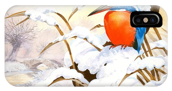 Kingfisher iPhone Case - Kingfisher Plate by John Francis