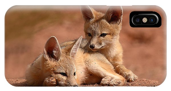 Kit Fox Pups On A Lazy Day IPhone Case