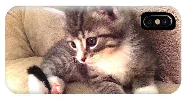 Kitten Deep In Thought IPhone Case