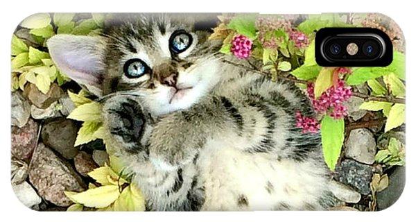 Kitten Dreams IPhone Case
