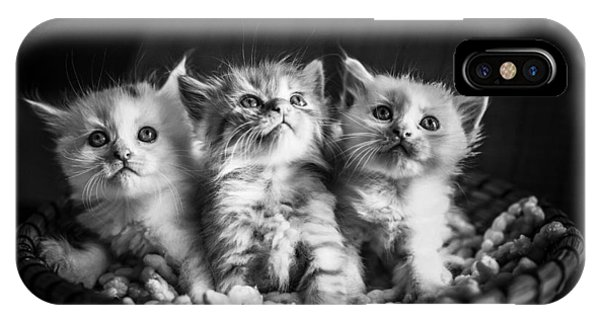 Kitten Trio IPhone Case