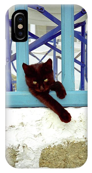 Kitten With Blue Rail IPhone Case