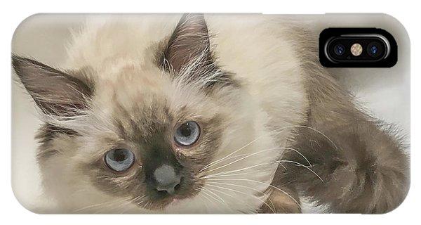 Kitty Blue Eyes IPhone Case