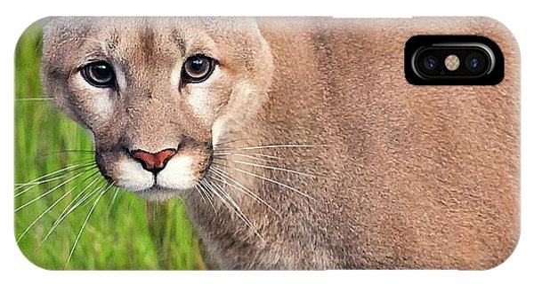 Kitty Look IPhone Case