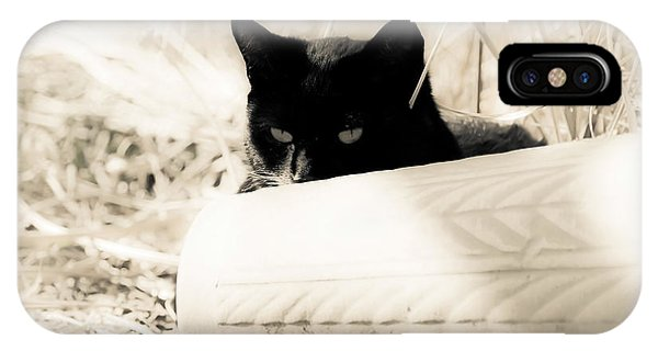 Kitty Stalks In Sepia IPhone Case