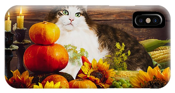 iPhone Case - Kitty's Harvest by Cynthia Leaphart