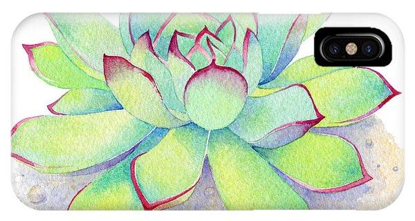 Cactus iPhone Case - Kiwi Aeonium by Laura Nikiel