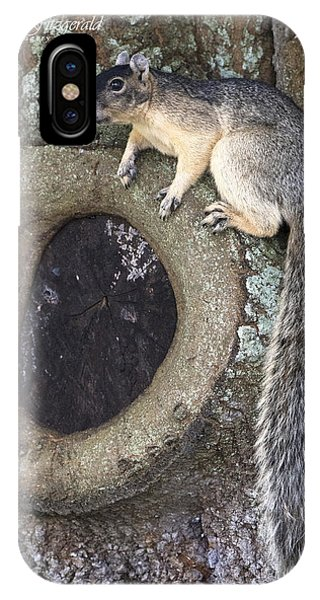 Knot A Squirrel IPhone Case