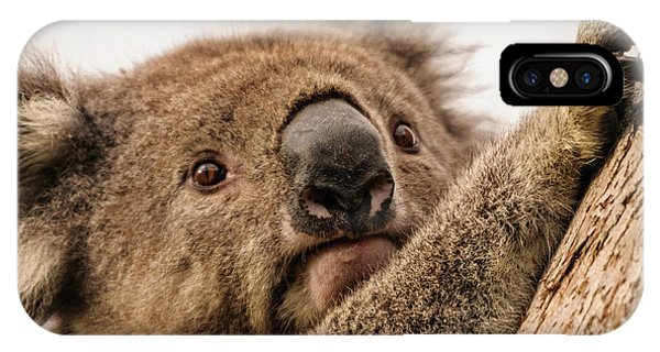 Koala 3 IPhone Case