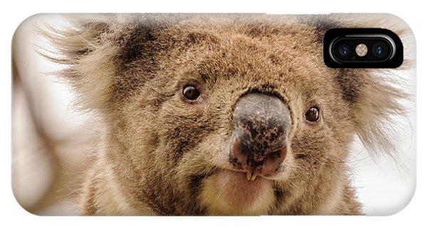 Koala 4 IPhone Case