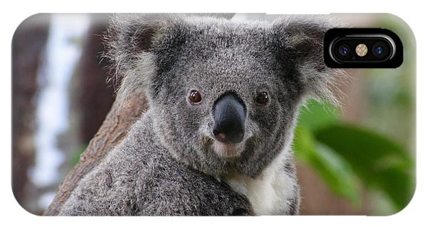Koala Bear 7 IPhone Case