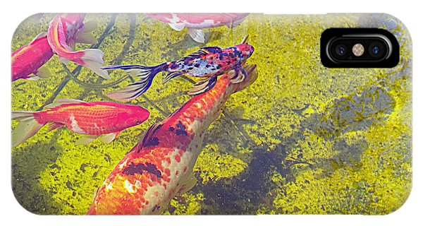 Koi And Friends IPhone Case