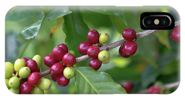IPhone Case featuring the photograph Kona Coffee Cherries by Susan Rissi Tregoning