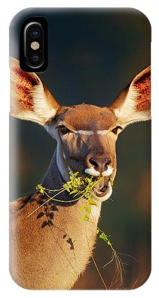 Head And Shoulders iPhone Case - Kudu Portrait Eating Green Leaves by Johan Swanepoel