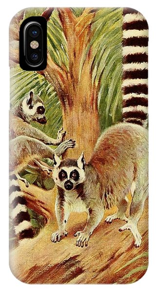 Ring-tailed Lemur iPhone Case - Kuhnert, Friedrich Wilhelm 1865-1926 - Wild Life Of The World 1916 V.3 Ring-tailed Lemur by Wilhelm Friedrich Kuhnert