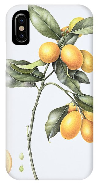 Botanical iPhone Case - Kumquat by Margaret Ann Eden
