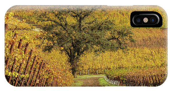 iPhone Case - Kunde Vineyards by Bill Gallagher
