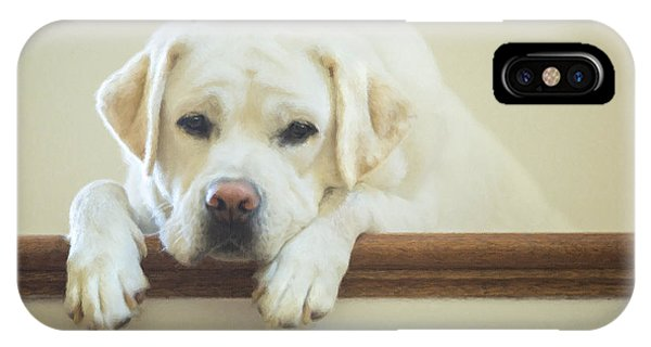 Yellow Lab iPhone Case - Labrador Retriever On The Stairs by Diane Diederich