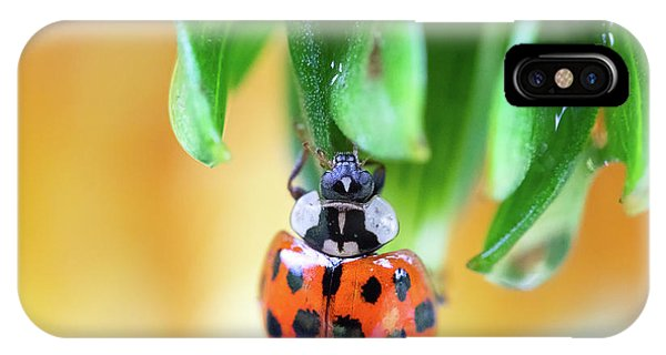IPhone Case featuring the photograph Lady Bug In A Heatwave by Brian Hale