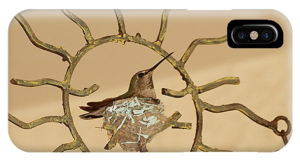 Lady Hummingbird On Her Nest IPhone Case