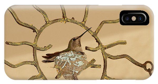 Lady Hummingbird On Her Nest IPhone Case