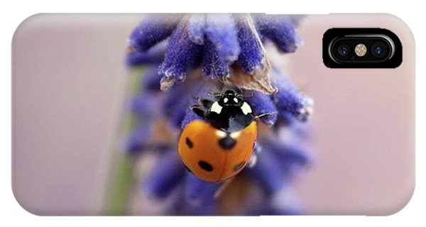 Animals iPhone Case - Ladybird On Norfolk Lavender  #norfolk by John Edwards
