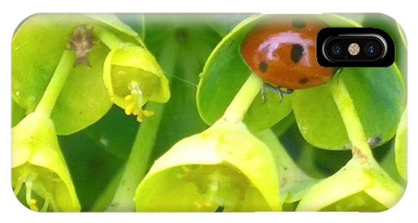 Green iPhone Case - #ladybug Found Some Shelter From The by Shari Warren