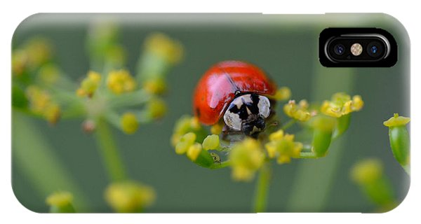 Ladybug In Red IPhone Case